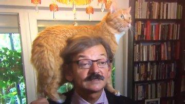 Röportaj sırasında kedinin yaşattığı zor anlar