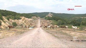 Beykoz'da 220 at günlerdir güneş altında bekliyor