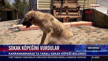 Sokak köpeğini vurdular