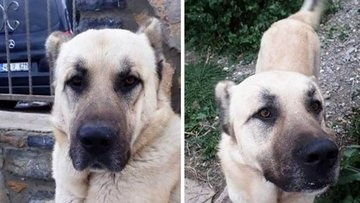 İşkence gören köpeğin gerçek sahibi ortaya çıktı