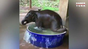 Minik filin suyla oyunu