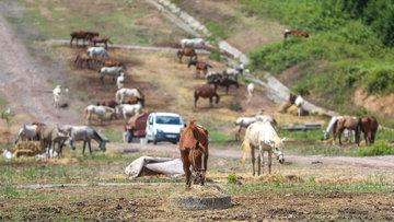 Muamma sürüyor... O atlara ne olacak?