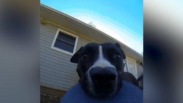 Sahibinin kamerasını çalan köpek