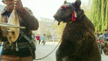 Bulgaristan'ın oynatılan ayılarına özgürlük veren adam