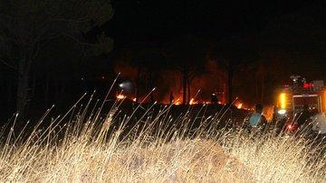 Ayvalık'ta orman yangını