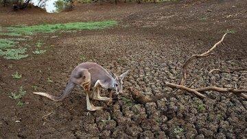 Avustralya'da kuraklık alarmı!