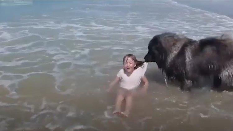 Küçük sahibini tehlikeden koruyan köpek