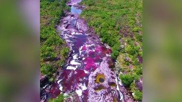Gökkuşağı nehri Cano Cristales