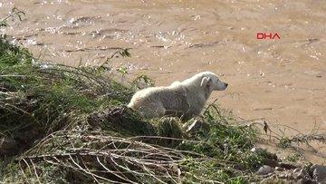 Sele kapılan köpek kurtarıldı