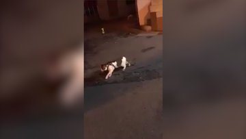Kedilerin kavgasını ayıran köpek