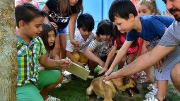 Her okula bir köpek