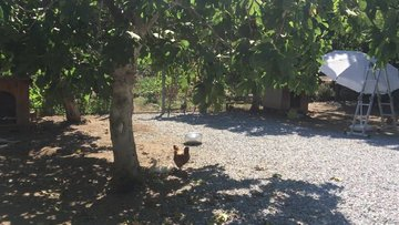 Herbafarm hem doğal üretim hem eğitim çiftliği