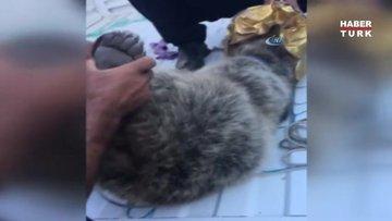 Ayı yavrusu yiyecek ararken kafasını tenekeye sıkıştırdı