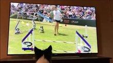 Katıldığı yarışmanın tekrarını izlerken aynı heyecanı yaşayan köpek