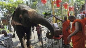 Buda'nın diş kalıntıları filin sırtında