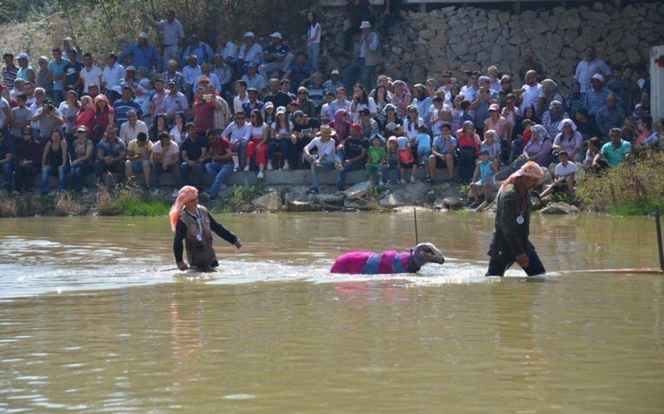 845 yıllık yarışma! Denizli'de çobanlar birinci olabilmek için yarıştı