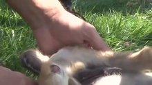 Ayağı ve patisi kesilmiş iki köpek yavrusu bulundu