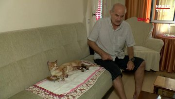 Bacakları yakılan kediyi evine alıp tedavi etti