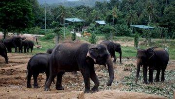 İşte dünyanın ilk ve tek fil yetimhanesi...