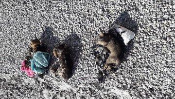 Zifte yapışan yavru köpekler böyle kurtarıldı