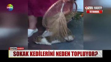 Sokak kedilerini neden topluyor?