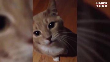 Bu kedilerin şakası yok