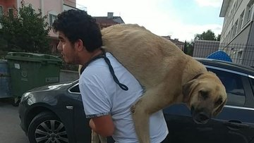 Sokak köpeğini sırtında taşıdı!