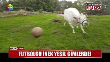 Futbolcu inek yeşil çimlerde