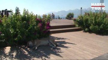 Antalya'da sahillerde ekim yoğunluğu