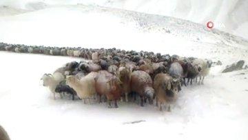 Doğu'da kar yağışı etkili oluyor... Köylüler koyun sürüleri ile kar ve tipiye yakalandı