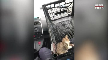 Yavru kedi için seferberlik