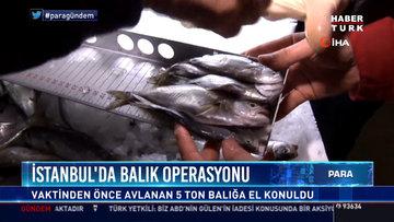 İstanbul'da balık operasyonu