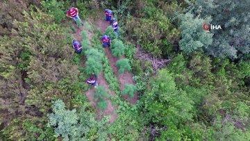 Jandarma ormanda gizlenmiş keneviri drone ile avlıyor