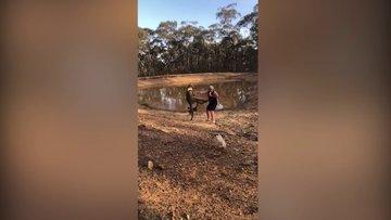 Köpeklerini korumak için kanguruyla yumruklaştı