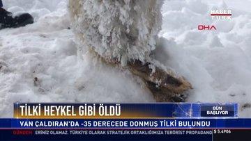 Tilki heykel gibi öldü: Van Çaldıran'da -35 derecede donmuş tilki bulundu