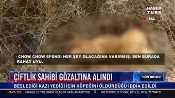 Çiftlik sahibi gözaltına alındı: Beslediği kazı yediği için köpeğini öldürdüğü iddia edildi