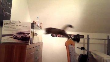 Akvaryuma atlamaya çalışan kedi