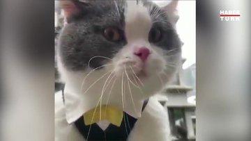 Bu kedi insan gibi konuşuyor!