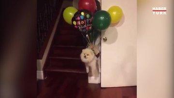 Hayat kısa köpekler uçuyor!