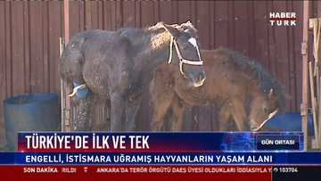 Türkiye'de ilk ve tek: Engelli, istismara uğramış hayvanların yaşam alanı