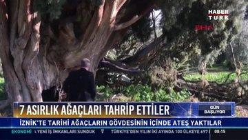 7 asırlık ağaçları tahrip ettiler!