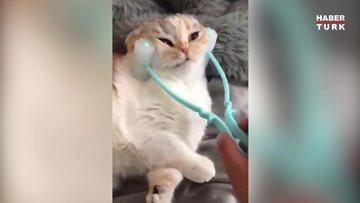 Kediler de masajı sever