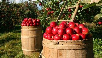Dijital tarım nedir?