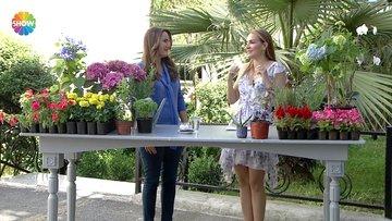 Bahçe ve balkona hangi türde çiçekler dikmeliyiz?