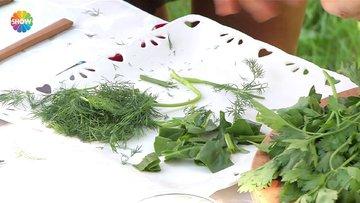 Kan yapıcı antioksidan yeşillik karışımı