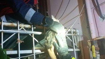 Boğazı demire saplanan kediyi itfaiye kurtardı