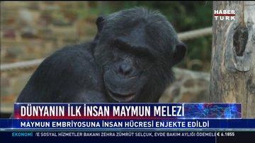 Dünyanın ilk insan-maymun melezini elde ettiğini iddia etti.