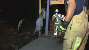 Sarıyer'de su kanalına düşen atı itfaiye kurtardı