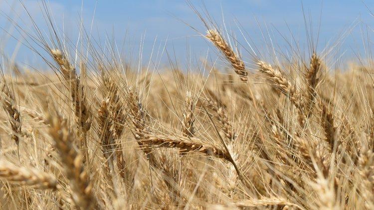 Ukrayna'nın penceresinden tarım sektörü