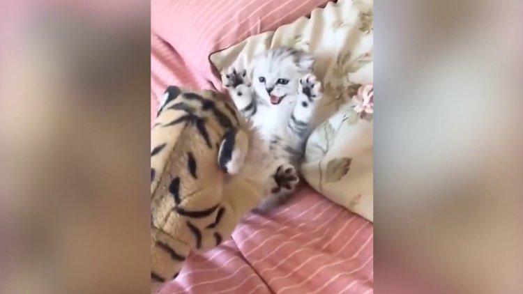 Oyuncak kaplandan korkan bebek kedi